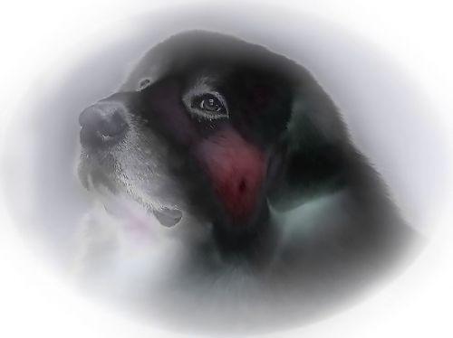 dog drawing dream