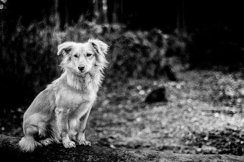 dog  forest  animal