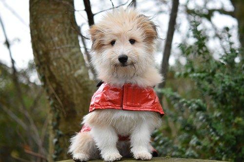 dog  dog wears a coat  pup
