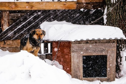 dog  snowfall  winter