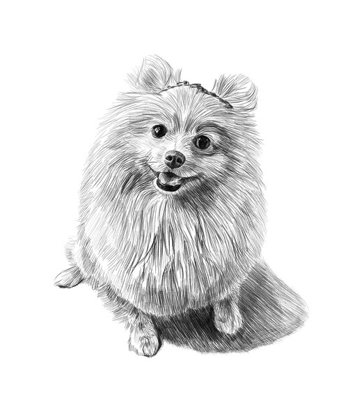 dog  pencil drawing  art