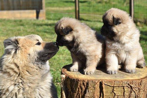 dog  dogs  dog puppies