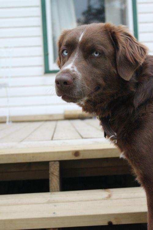 dog doggy pup
