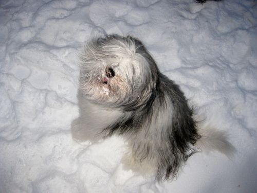 dog play expectant attitude