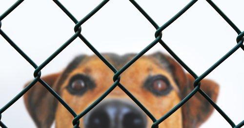 dog  fence  grid