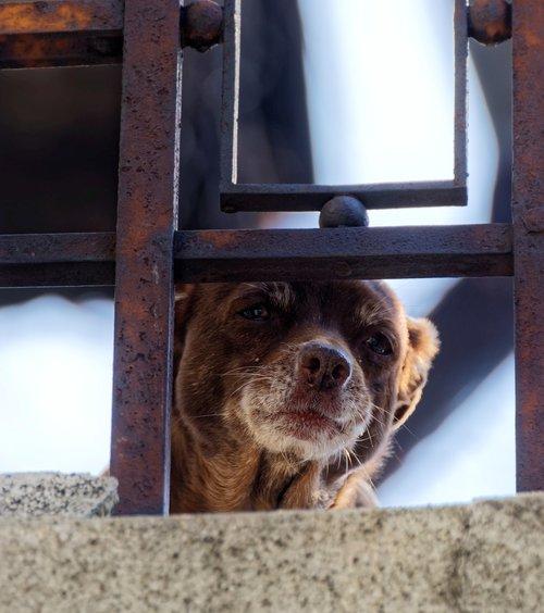 dog  balcony  head