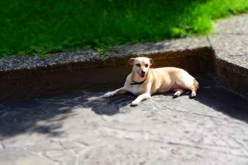 dog animal recovery