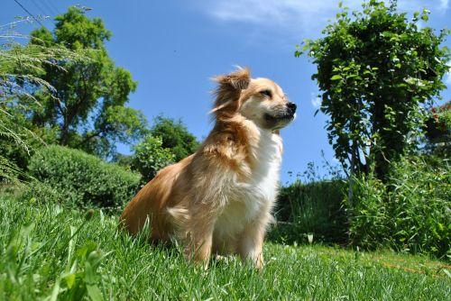 dog doggy garden