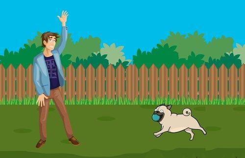 dog  park  running