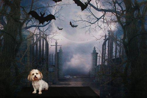 dog  halloween  scene