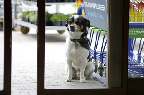 dog  wait  patience