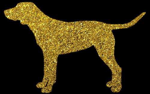 dog  golden dog  doggy