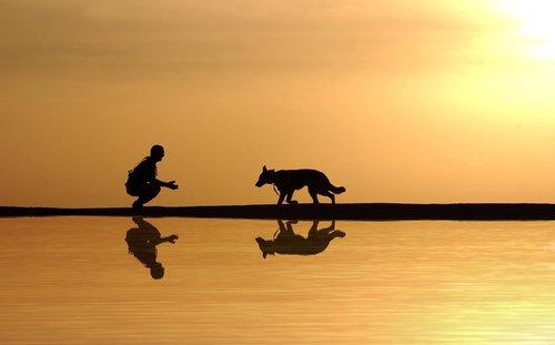 dog  man  water