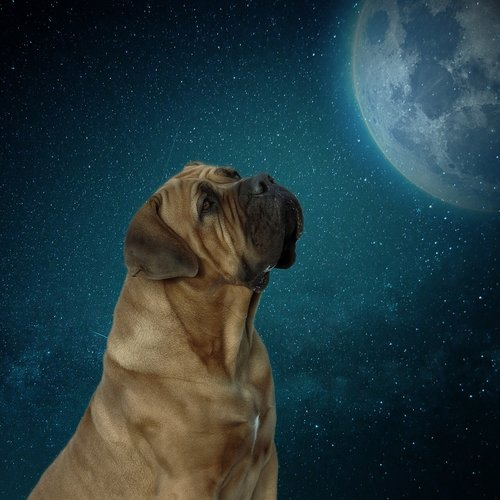 dog  moon  moonlight