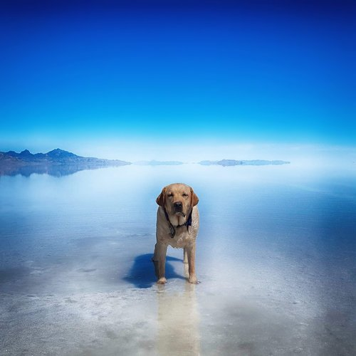 dog  gunner  salt flats
