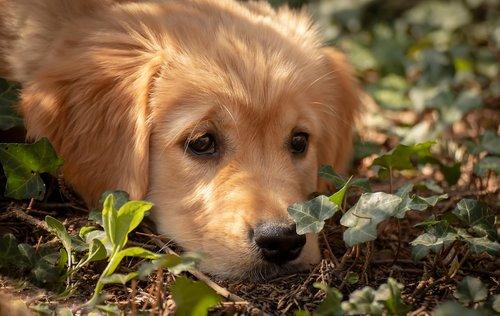 dog  puppy  view