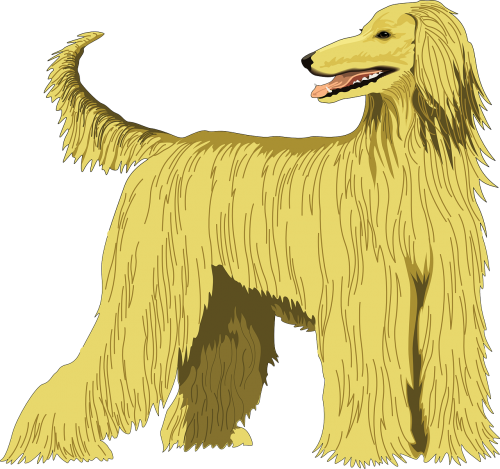 dog pet hound