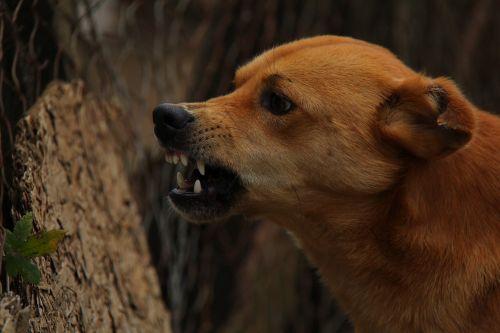dog angry rage