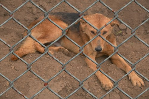 šuo,gyvūnų prieglauda,gyvulininkystė,gyvūnų pasaulis,tvora,vielos tinklelio tvora,sugauti,eksponuotos,žiaurumas gyvūnams,gyvūnų gerovė