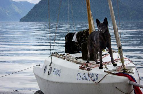 šuo,jachta,altas,ežeras Телецкое