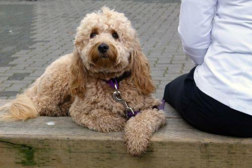 dog sitting bench