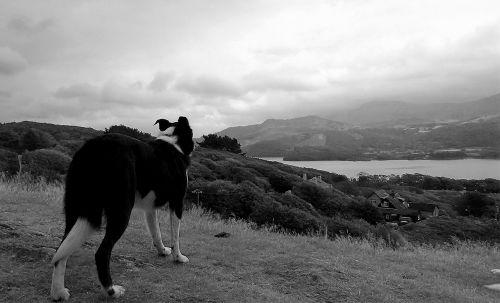 dog sea sky