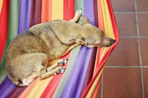 dog hammock colorful