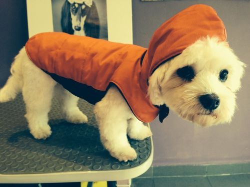 dog dress waterproof