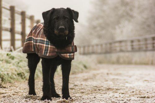 dog animal winter
