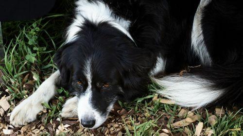 dog laying nature