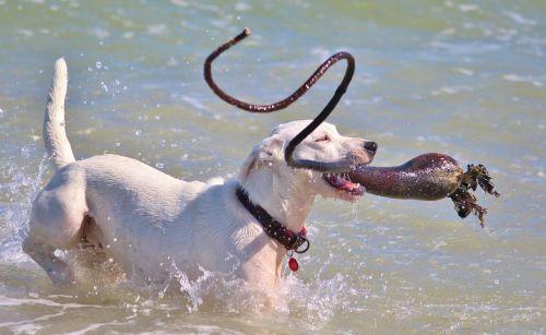 dog batons active