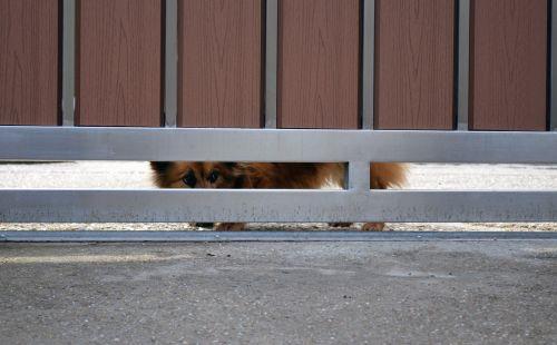 dog fence hidden