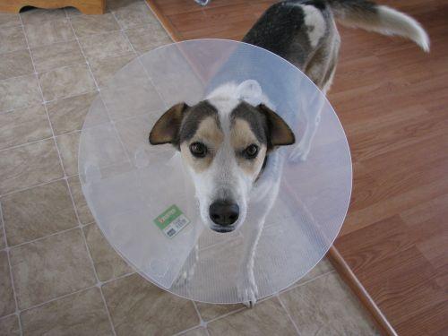 dog patient portraint