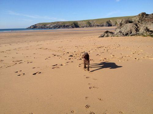 dog beach cornwall