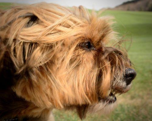 dog head portrait