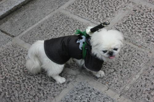 dog white samurai