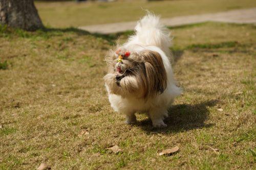 dog grassland positive