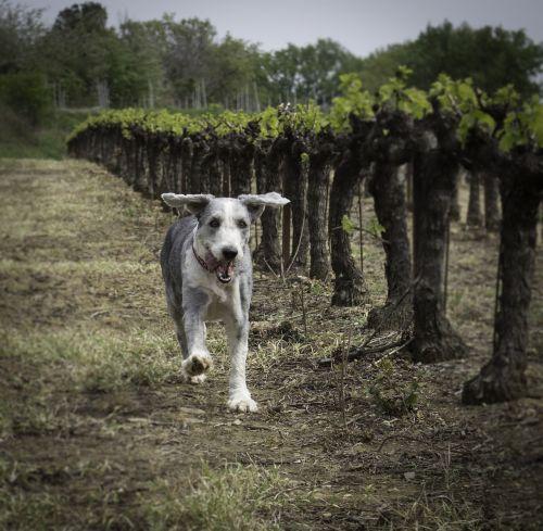 dog running dog happy dog