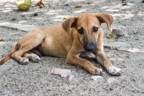 dog homeless sad