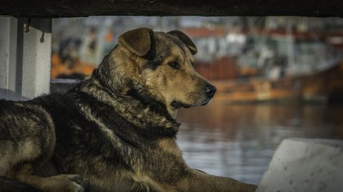 dog boat port