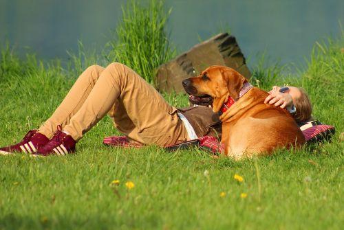 dog girl summer
