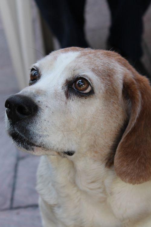 dog white thoughtful