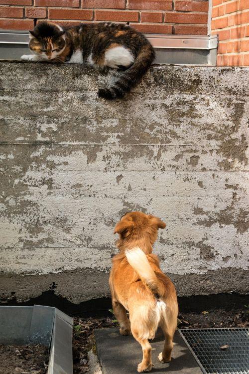 dog cat growl