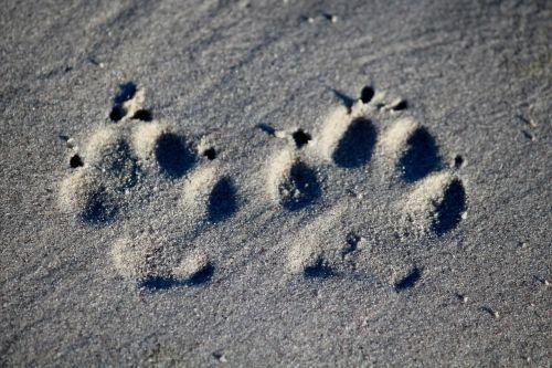 dog footprint beach