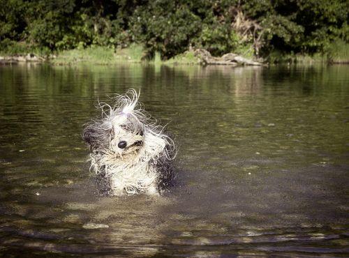 dog funny wet