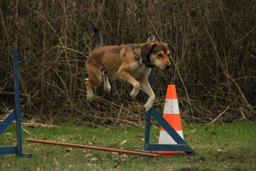 dog jump exercise