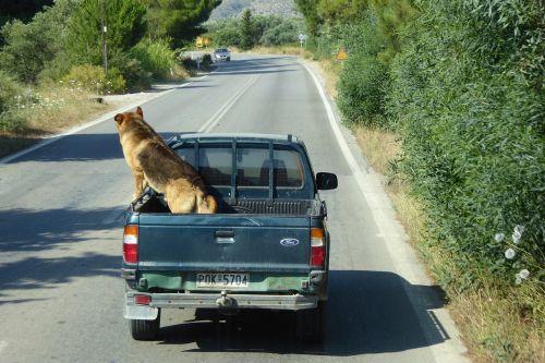 dog pick up traffic