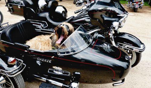 dog peace motorcycle