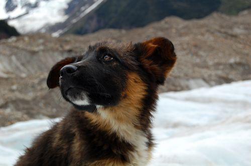 dog glacier snow mountain