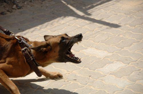 dog attack aggressive